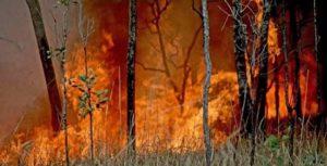 De violents feux dévorant la forêt australienne (image des Firefighting Australia).